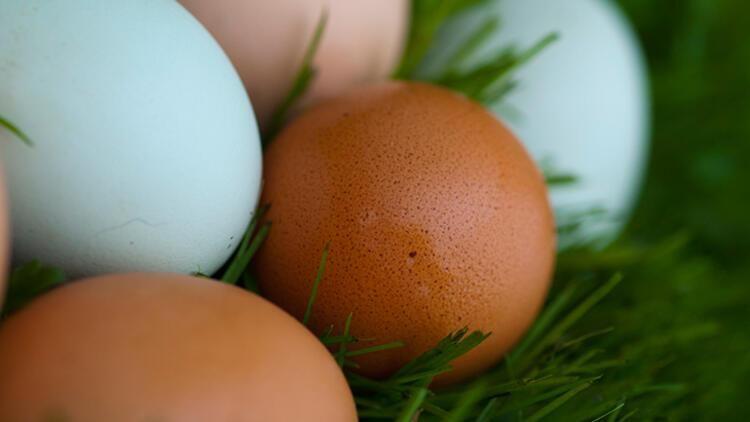 Yumurtadaki yüksek kolesterol çok zararlı mı