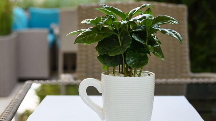 4-Kahve çiçeğiNereye koymalı: